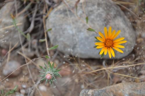 Cinco maneras de atraer mariposas a tu jard n el blog de for Poner piedras en el jardin
